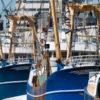 Pesca: Unimpresa, entro 16 luglio armatori comunicano caratteristiche natanti